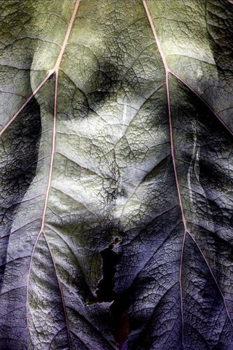 Torso/Leaf