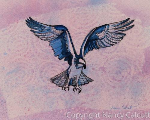 Osprey in Flight by Nancy Calcutt