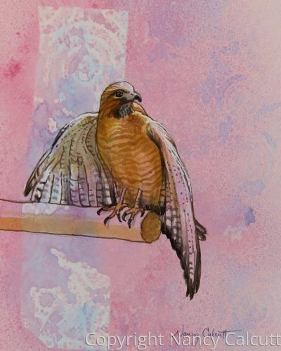 Hawk Resting