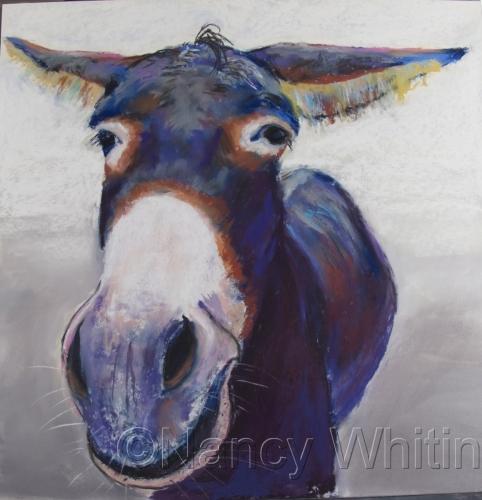 Rainproof Donkey by Nancy R. M. Whitin