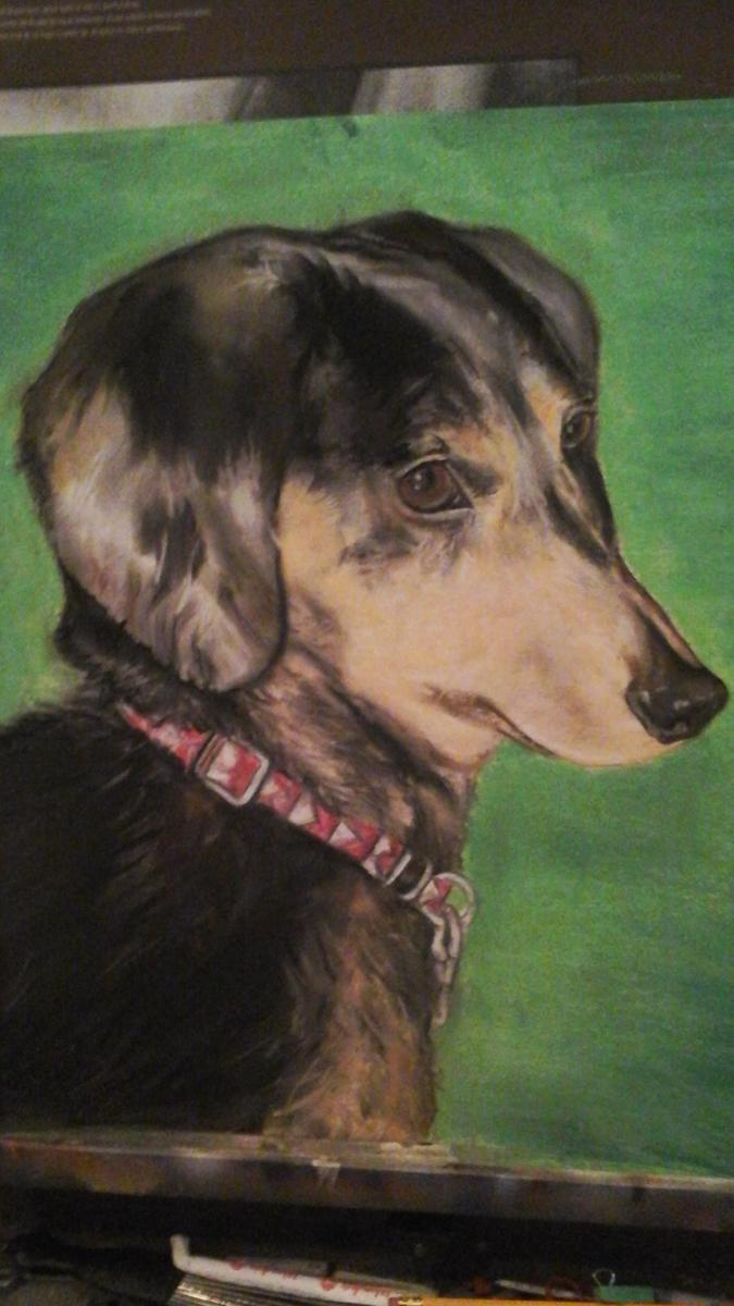 commissioned pet portrait  Ollie (large view)