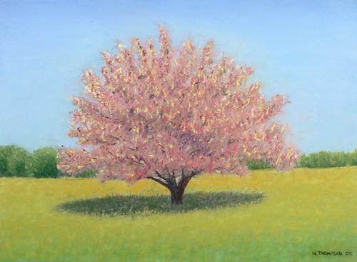 Cherry Tree (large view)