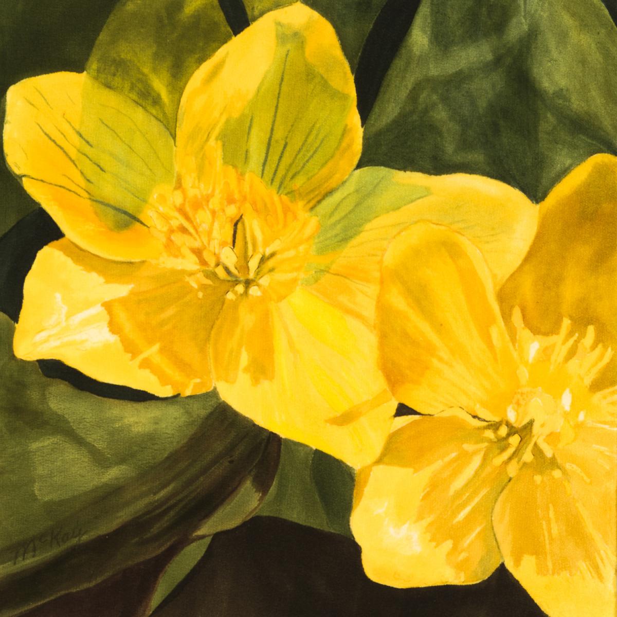 Marsh Marigolds #2 (large view)