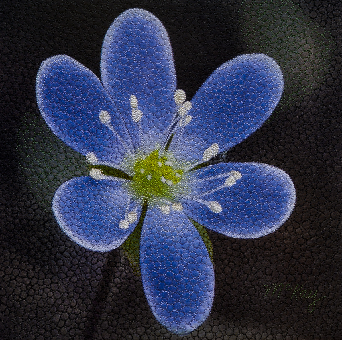 Round Lobed Hepatica (large view)