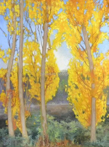 Gold Poplars