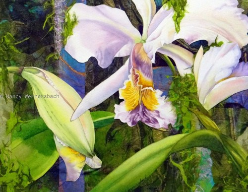 Cattleya Orchid and Bud Collage