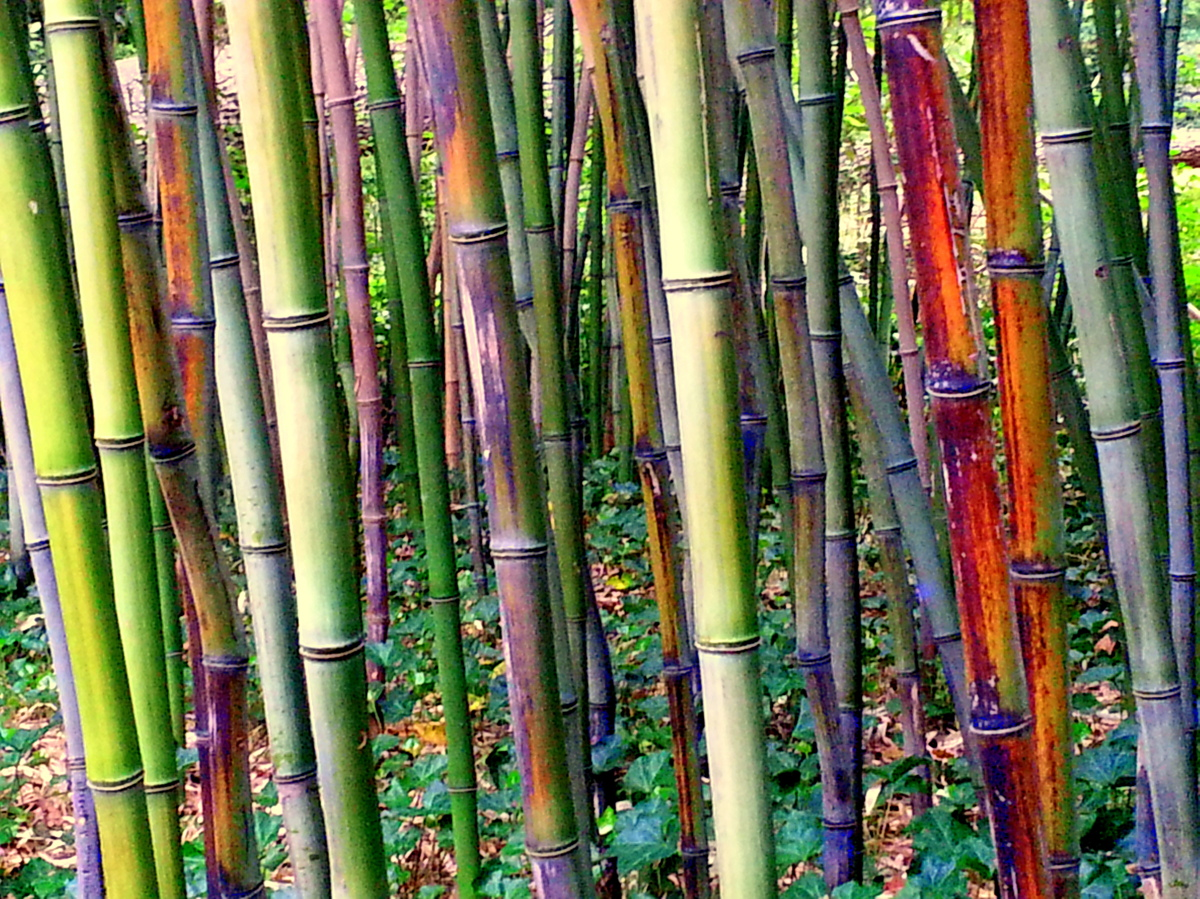 Bamboo 1_5 (large view)