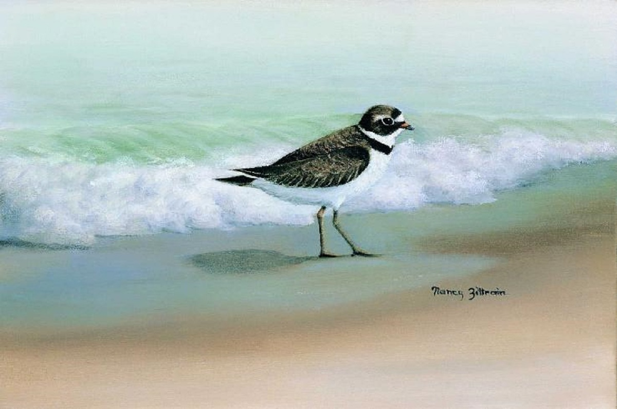 Plover (large view)