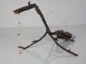 Stick Insect (thumbnail)
