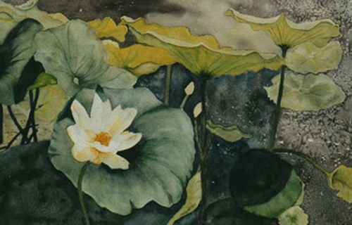 Waterlily (large view)