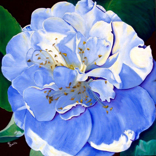 Camellia with the Blues (large view)