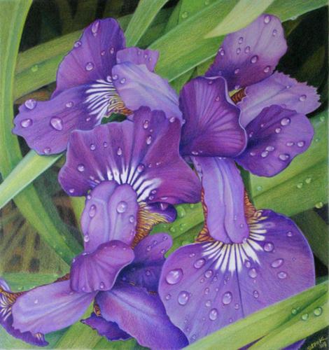 """Purple Rain"" (large view)"