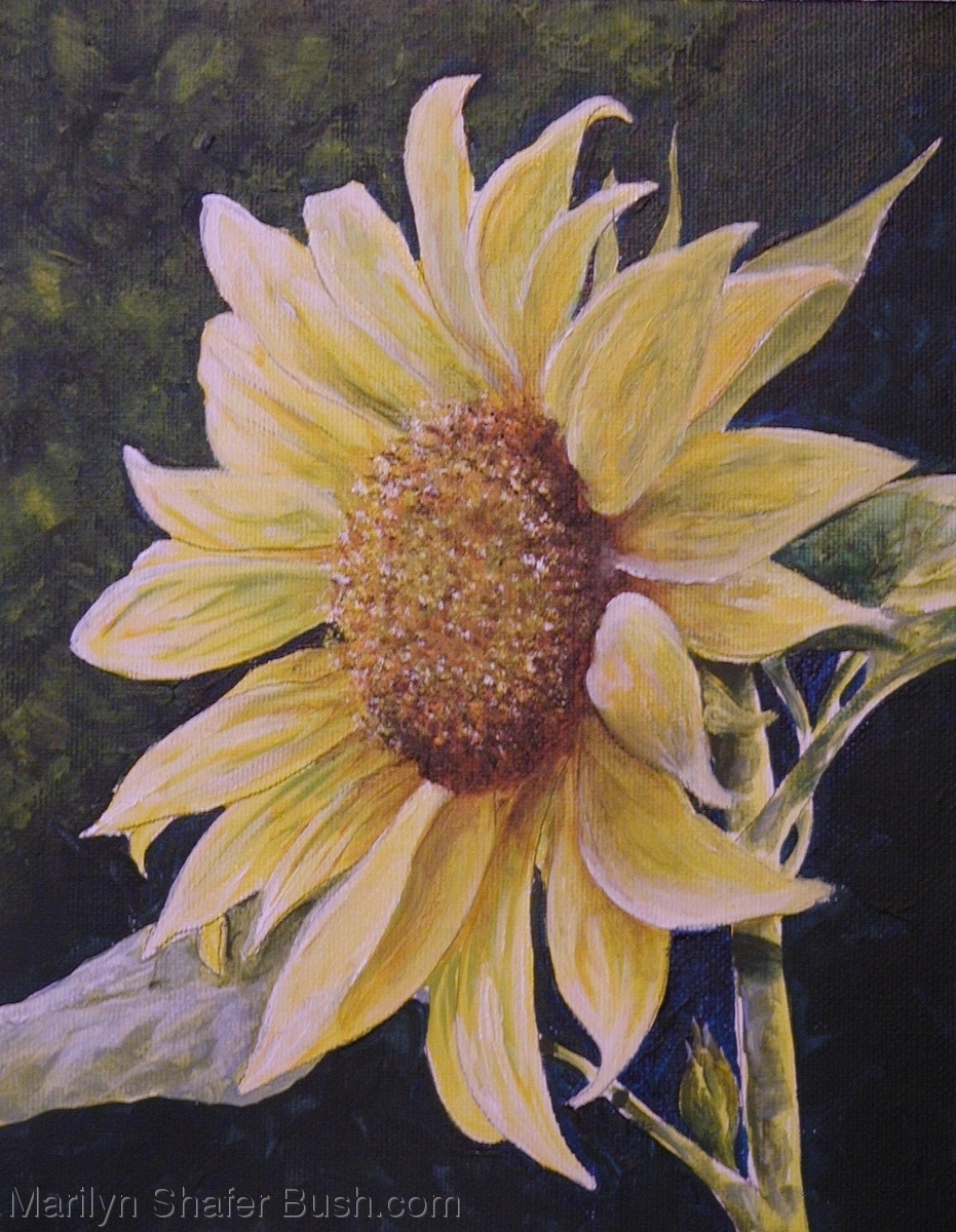 Sunflower (large view)