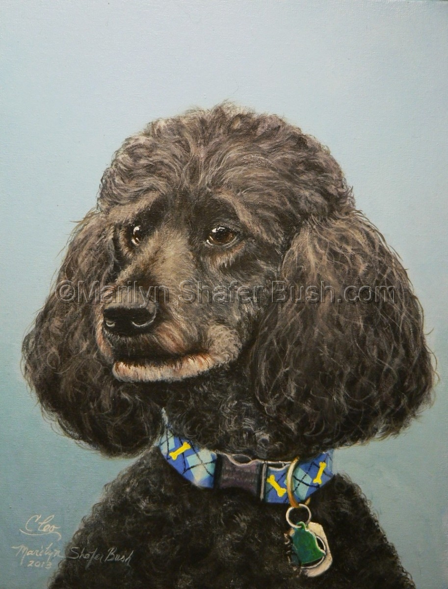 Portrait of a black standard female poodle (large view)