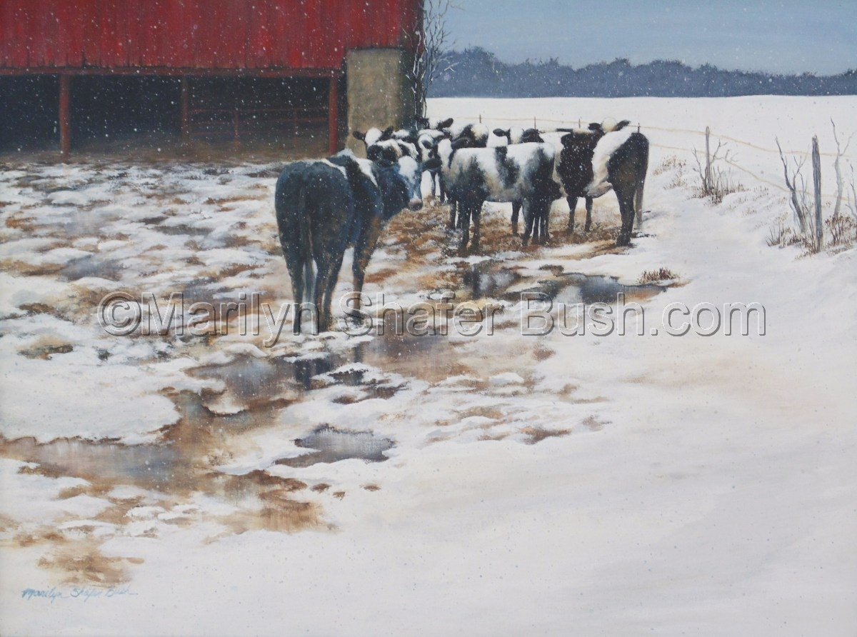 Cows standing in front of a barn in the falling snow. (large view)