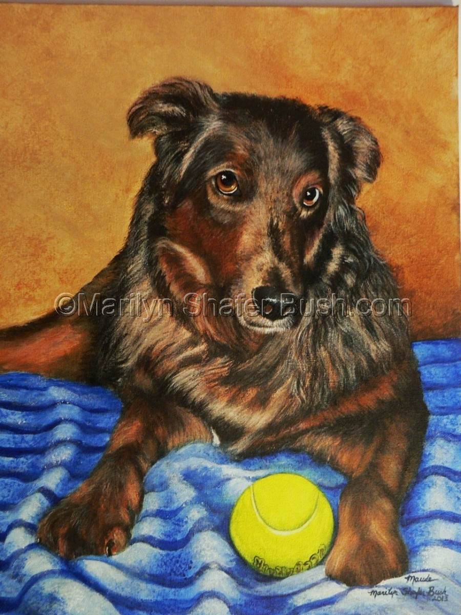 Portrait of a dog with a tennis ball. (large view)