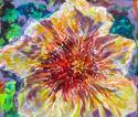 In Full Bloom! (thumbnail)
