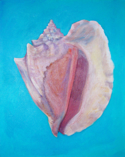 Shell No. 15 (Queen Conch)