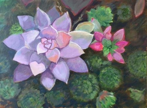 Succulents (Desert Garden)