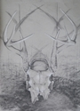 suspended antlers (thumbnail)
