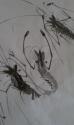 crustaceans (thumbnail)