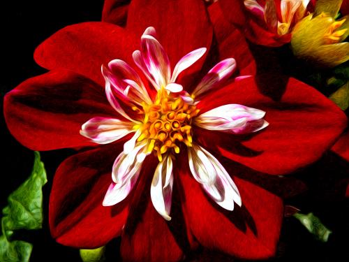 Wildflower 18