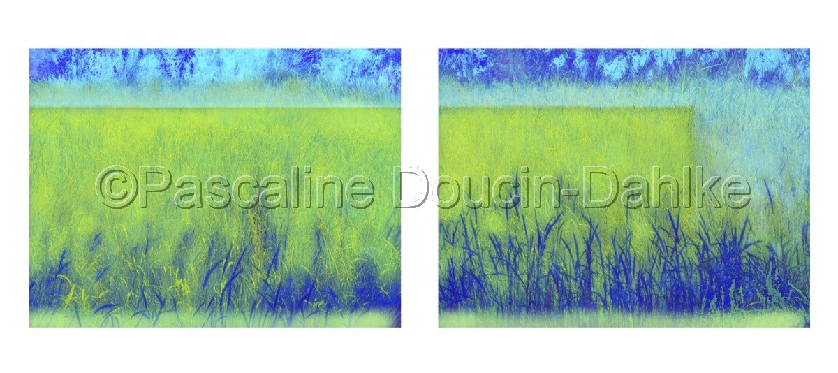 Diptych Picture of a meadow in the Prés salés d'Arès, France with  mostly vibrant green colors (large view)