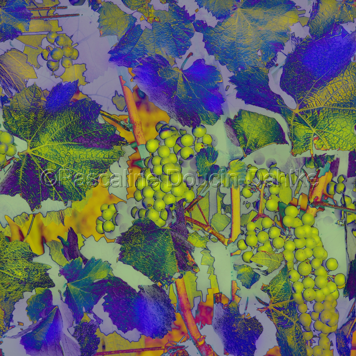 Green grapes drapery (large view)