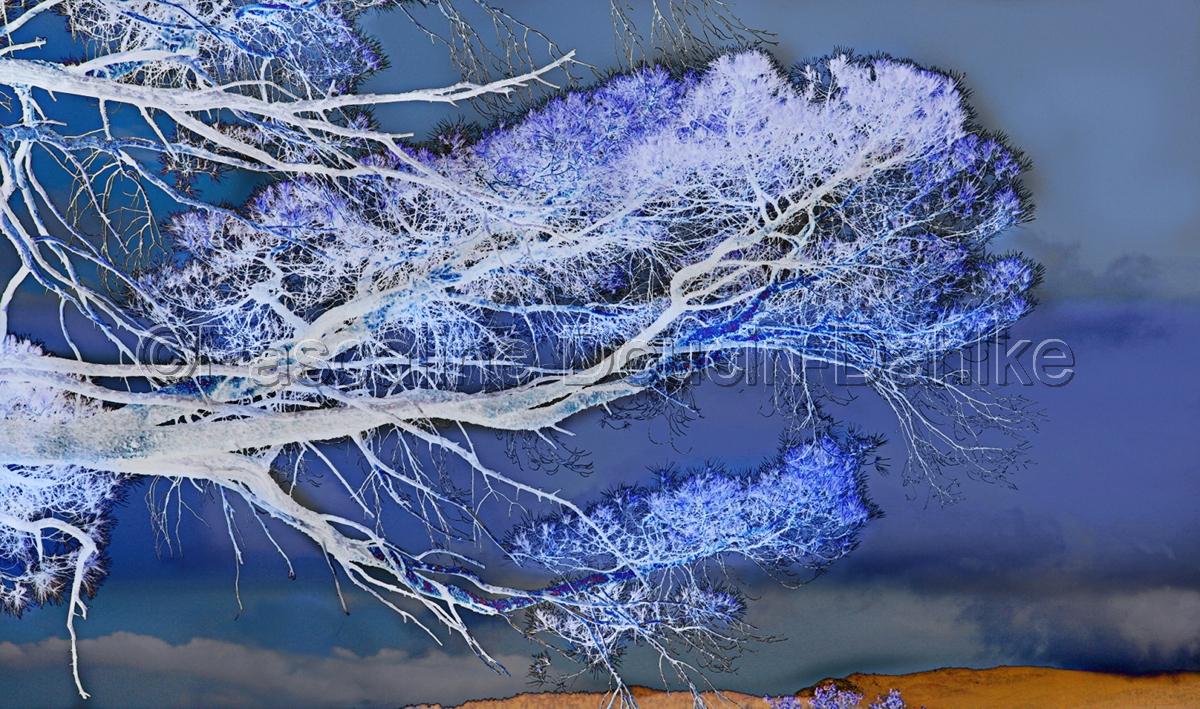 Pine tree branch (large view)