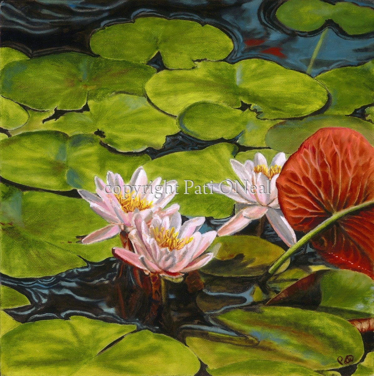 Pink Water Lilies (large view)
