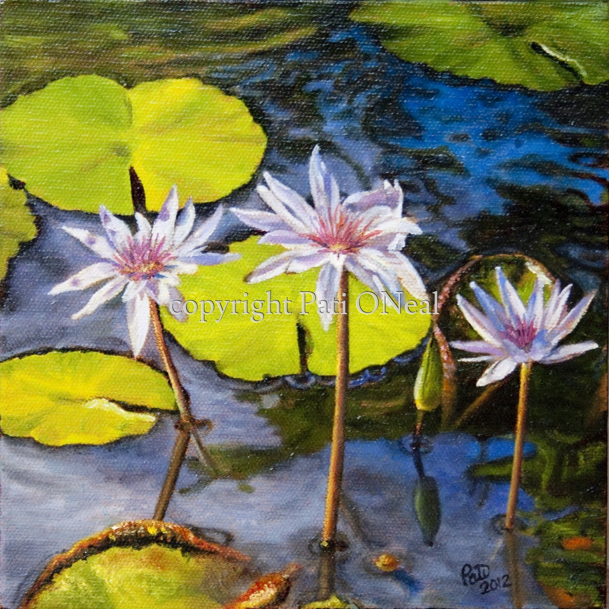 Water Lily Trio (large view)