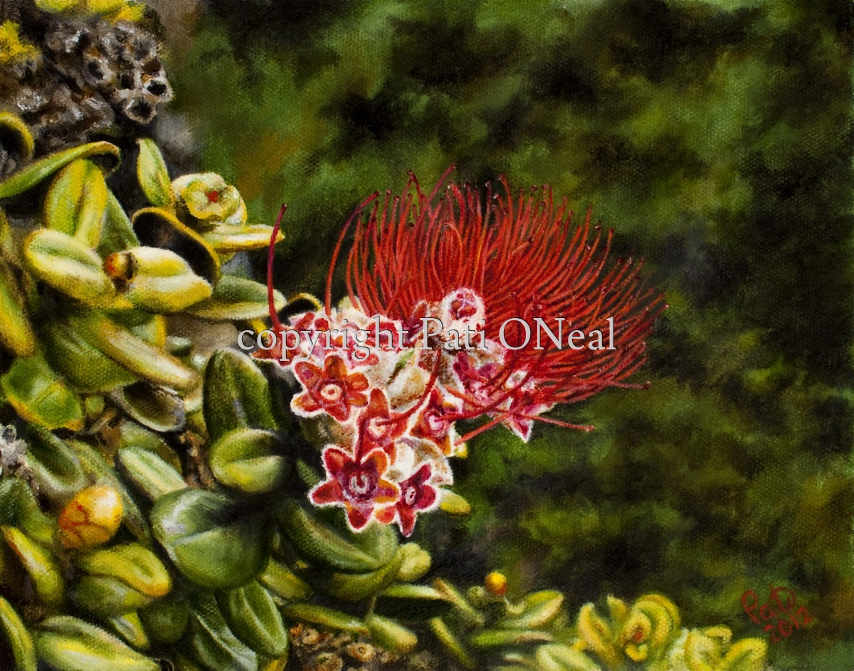 Paliku 'Ohi'a Lehua Blossom (large view)