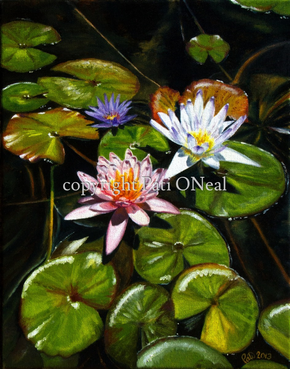 Tri-Color Water Lilies (large view)