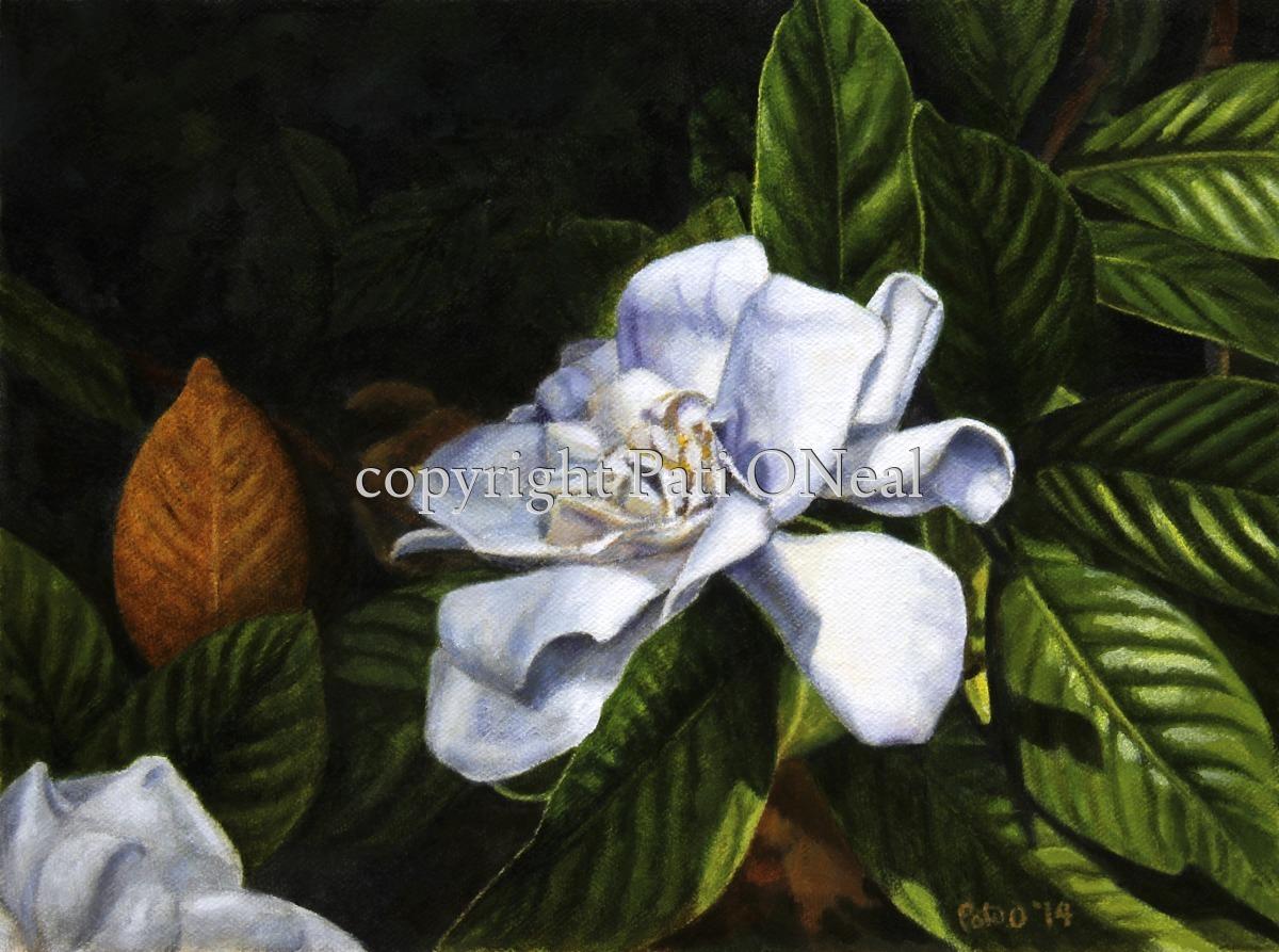 Shaded Gardenia (large view)