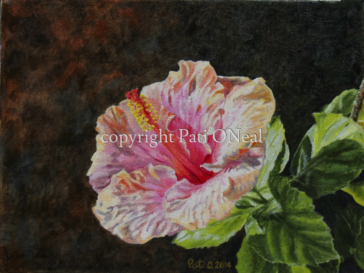 Peach and Pink HIbiscus (large view)