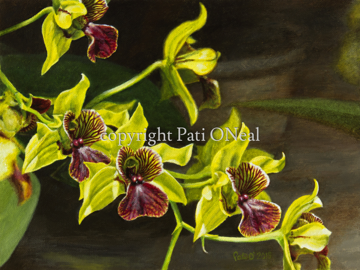 Dendrobium - Little Green Apples (large view)