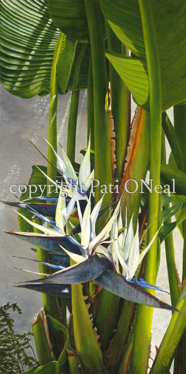 White Bird of Paradise (large view)