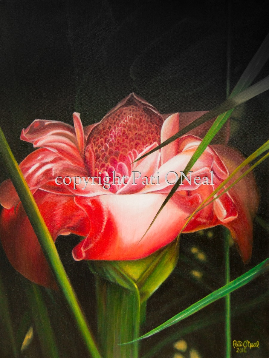 Torch Ginger Illumination (large view)