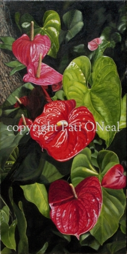 Anthuriums by Pati O'Neal