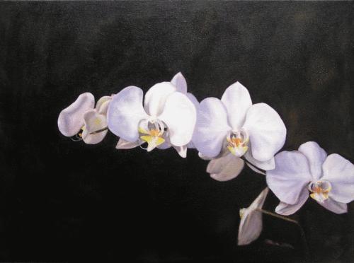 Phalaenopsis (large view)