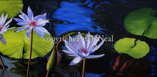 Lavender Water Lilies (large view)