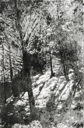Light Among the Trees
