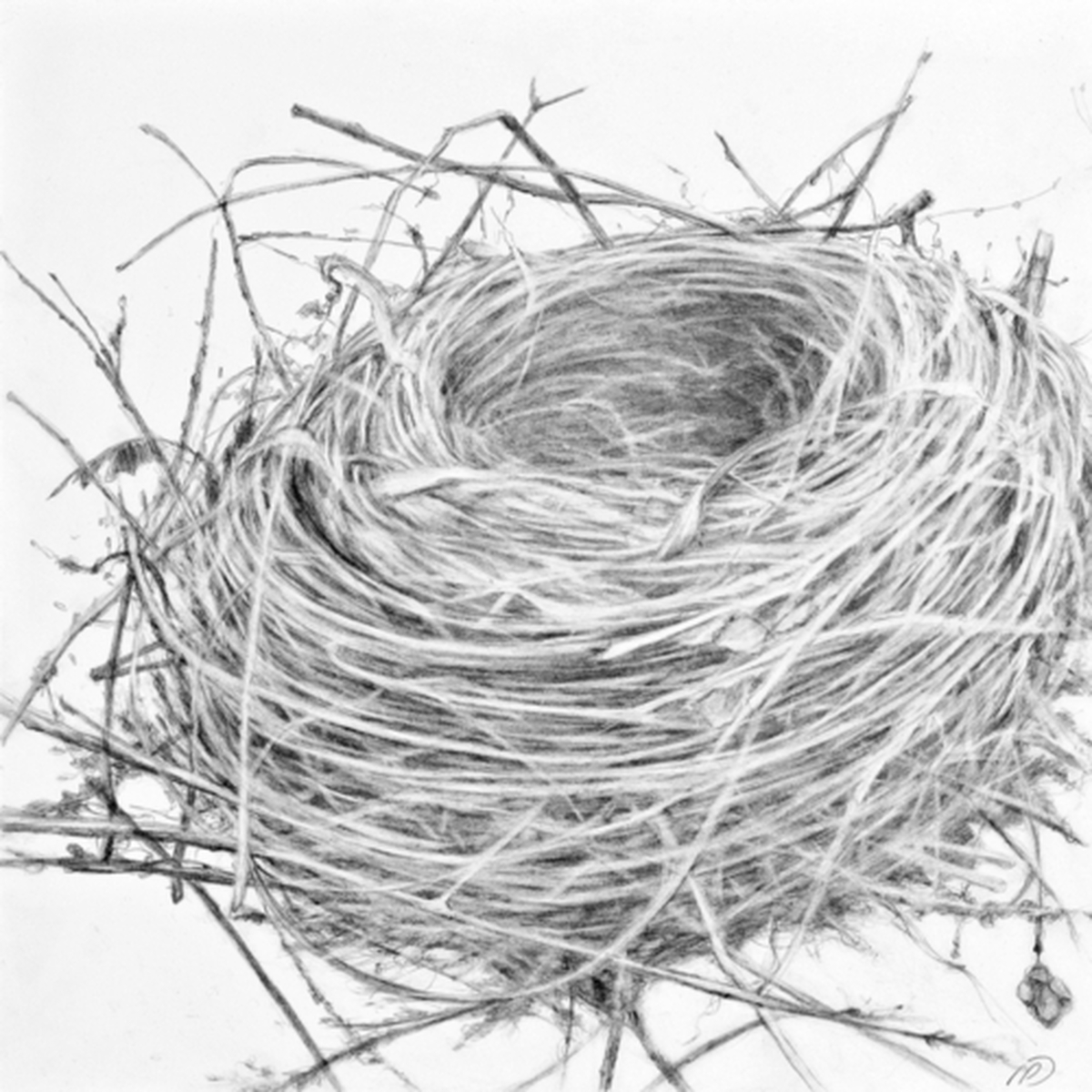 essay on empty nest Viggo mortensen: a full heart and an empty nest  as the story begins, we are  deprived of leslie's presence, making the intensely pro-active.
