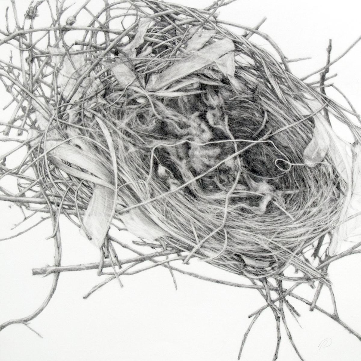 Sparrow nest (large view)