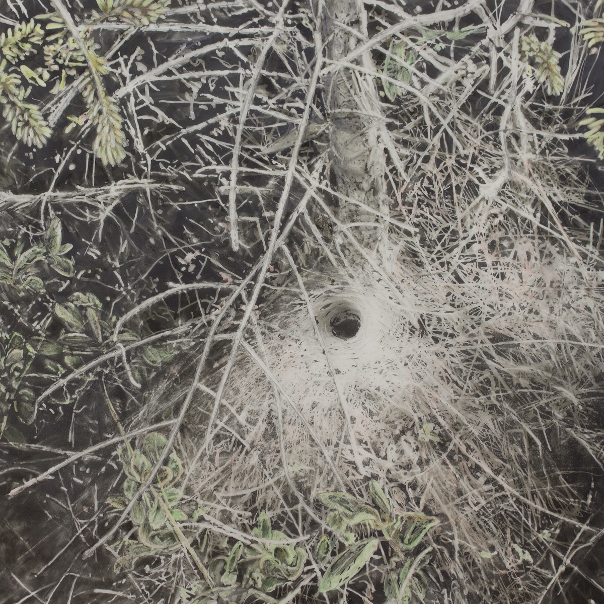 funnel web (large view)