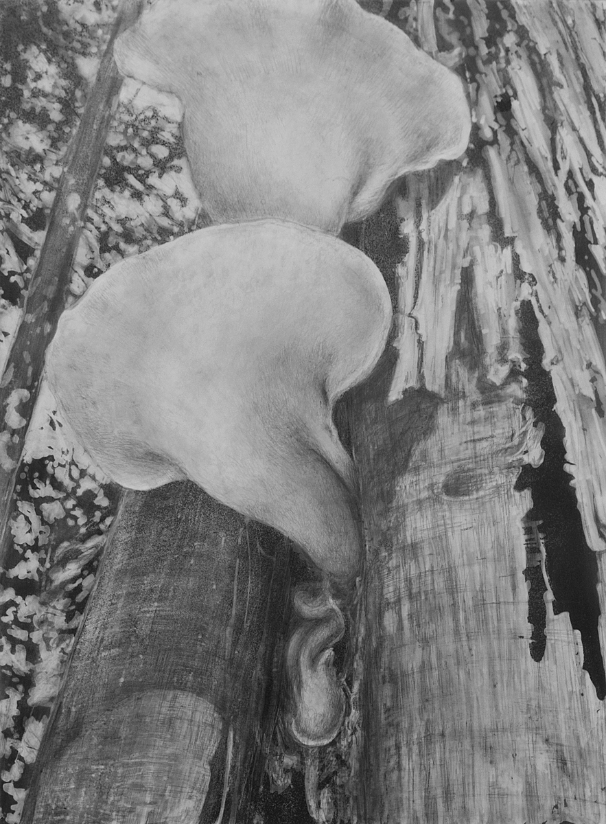 hickory mushroom (large view)