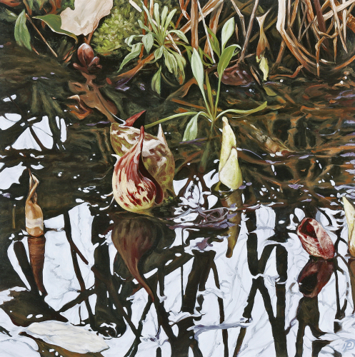 Skunk Cabbage Pool by Patricia  Dorr Parker