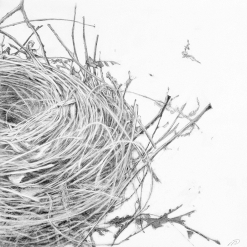 Empty nest drawing