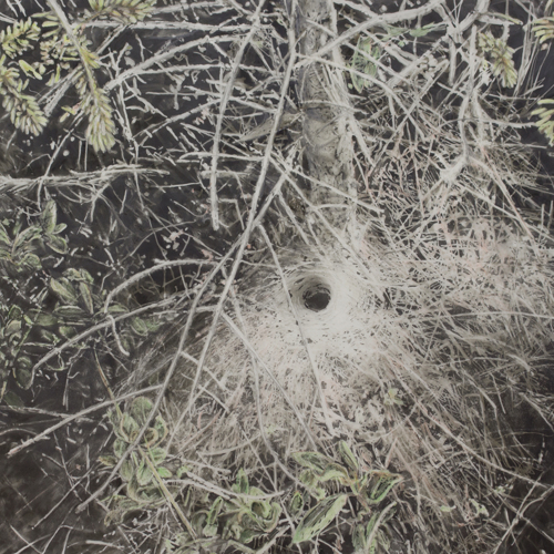 funnel web