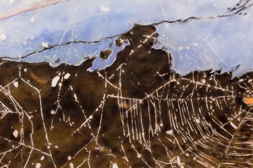 orb weaver web #2 by Patricia  Dorr Parker